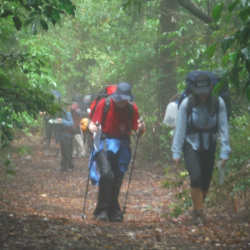 a group of hikers walking through the bush in the Barrington Tops National Park