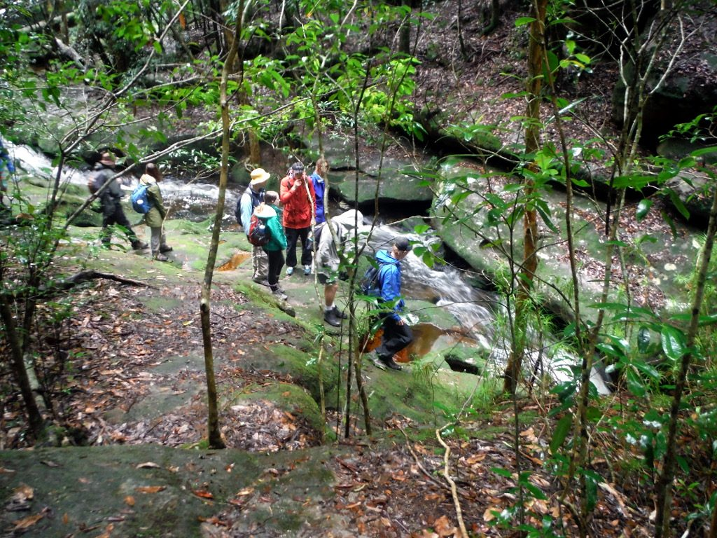 A group of people are standing beside a stream looking at the flowing water during the Watagan National Park Discovery Tour